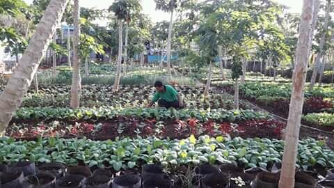 Gesti Seno Menyulap Tanah Karang Hingga Dirinya Menjadi Duta Pertanian Organik