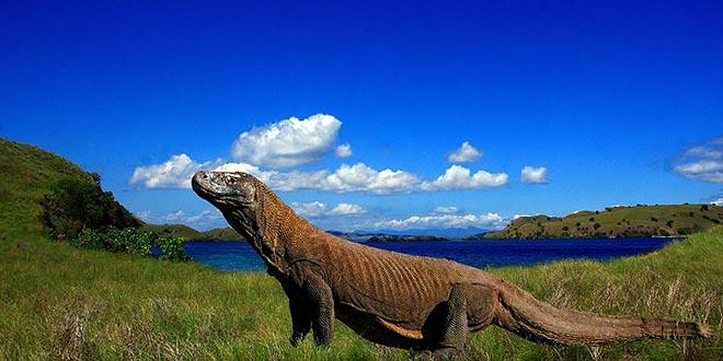 Hasil gambar untuk pulau komodo